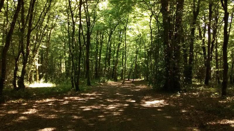 Promenades en forêt à St Laurent des Autels, à l'étang de la Foucaudière.
